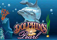 dolphins pearl image